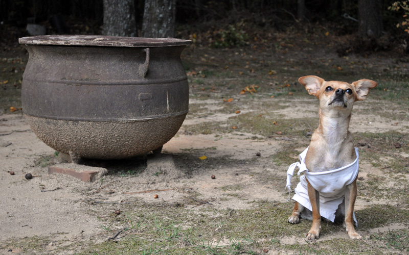 Cheap and Easy Halloween Costumes for Dogs. Dobby Dog Costume & Cheap and Easy Halloween Costumes for Dogs u2013 a small life